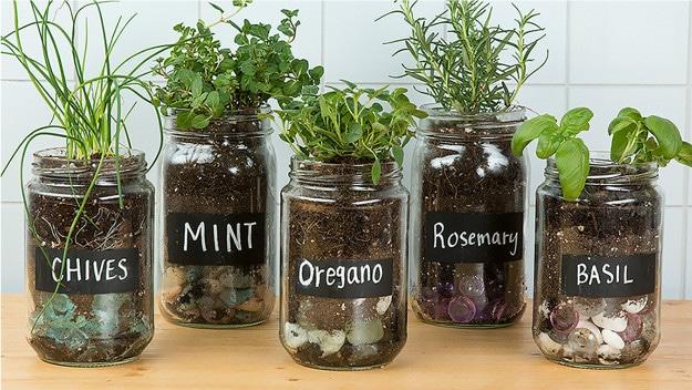 Re-purpose Glass Jars Into Seed Starters - Health Nut Ninja